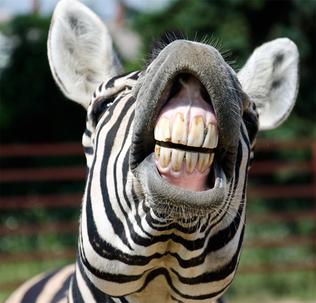online advertising zebra teeth