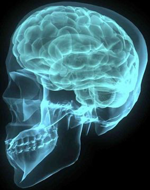 webpage Brain XRay in blue skull